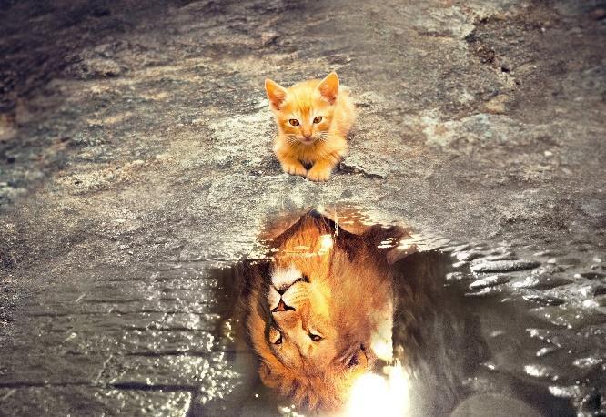 pour que le petit chat devienne un lion